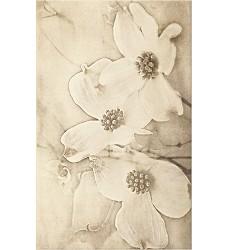 Tuti Beige flower    dekor    25x40