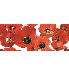Colorgloss Tulipán    dekor     20x50